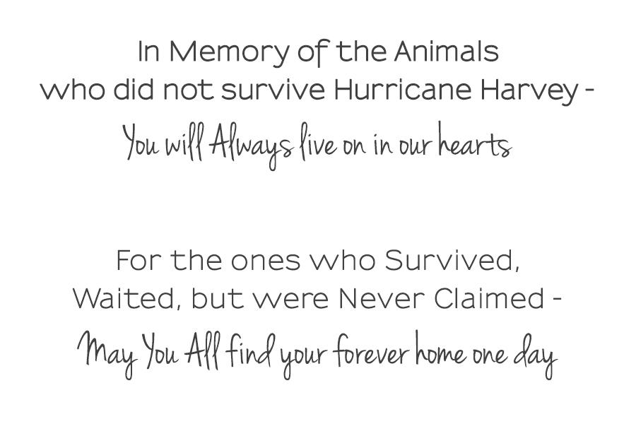Volunteering in Hurricane Harvey Animal Rescue -Slide01b