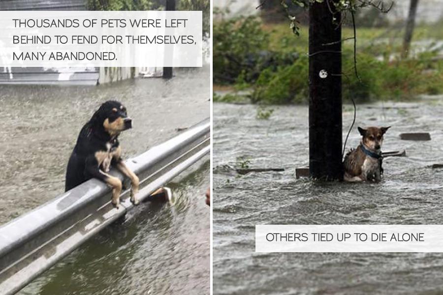 Volunteering in Hurricane Harvey Animal Rescue -Slide06