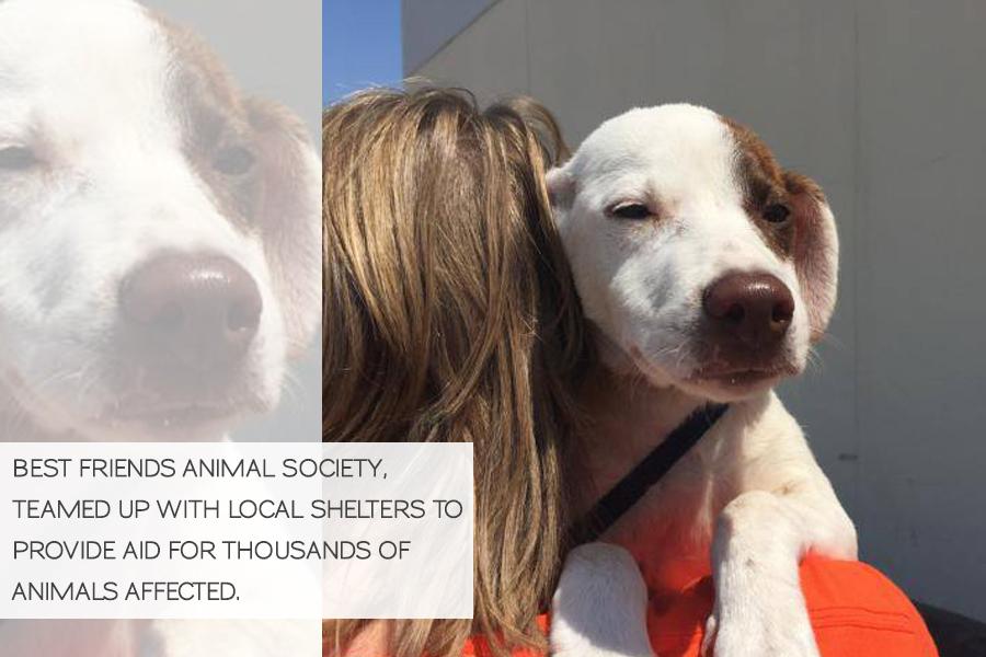 Volunteering in Hurricane Harvey Animal Rescue -Slide07