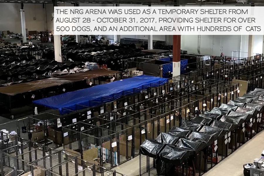 animals housed in the NRG arena as a temporary shelter