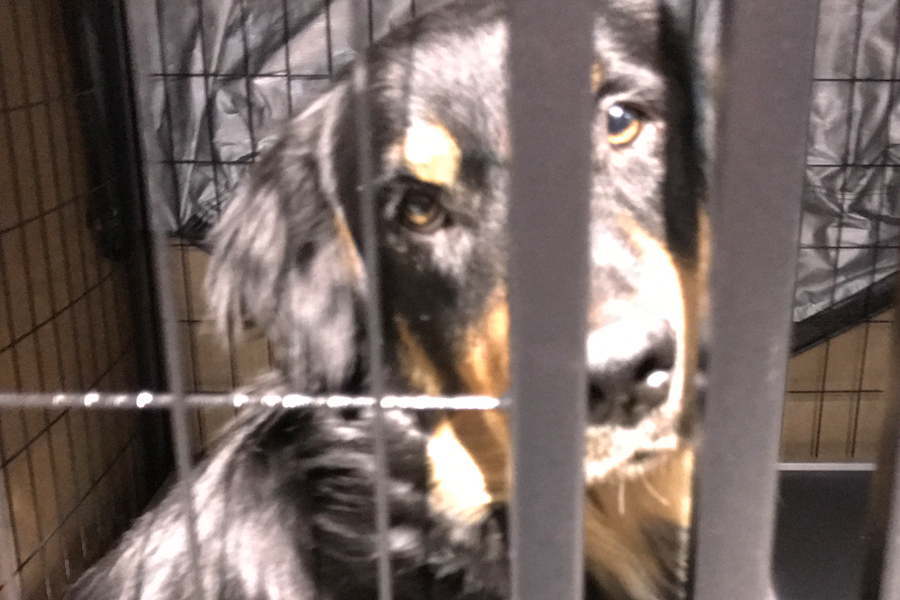 Volunteering in Hurricane Harvey Animal Rescue -Slide12