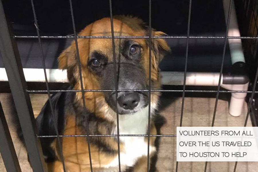 Volunteering in Hurricane Harvey Animal Rescue -Slide14