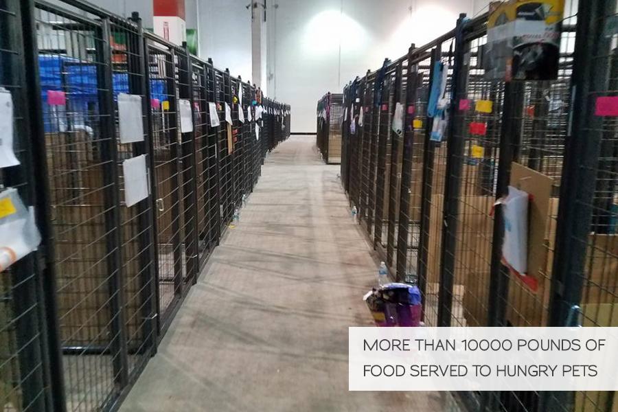 Volunteering in Hurricane Harvey Animal Rescue -Slide18