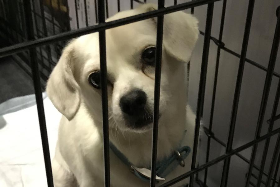 Volunteering in Hurricane Harvey Animal Rescue -Slide23a