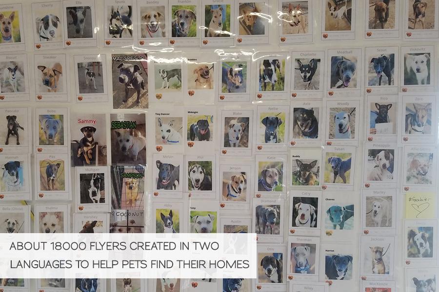 Volunteering in Hurricane Harvey Animal Rescue -Slide29a