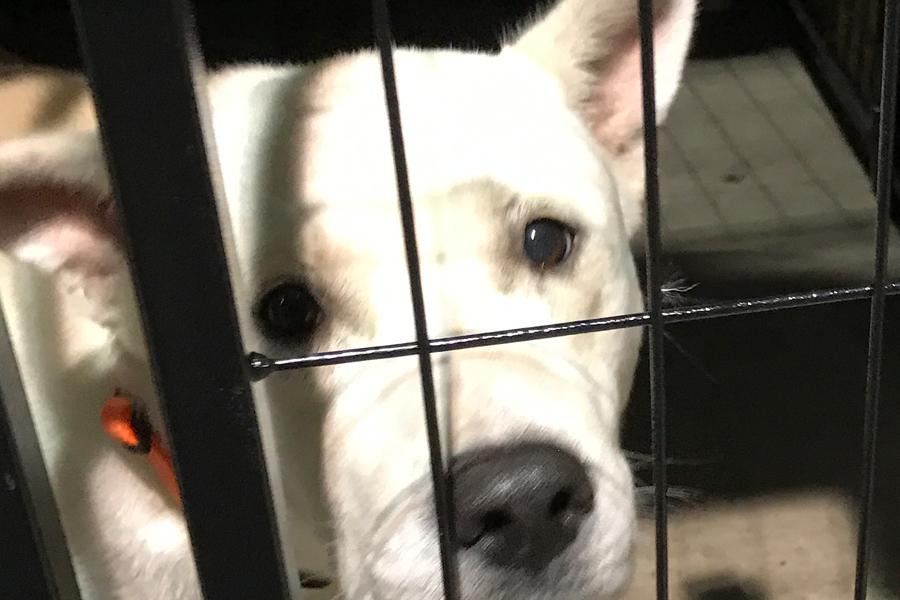 Volunteering in Hurricane Harvey Animal Rescue -Slide30