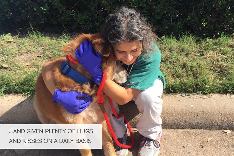 Volunteering in Hurricane Harvey Animal Rescue -Slide32