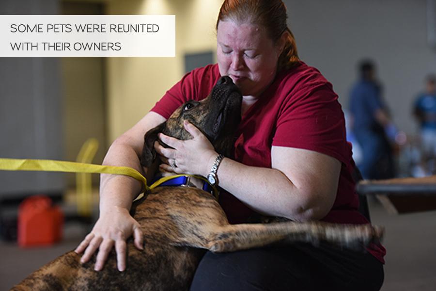 Volunteering in Hurricane Harvey Animal Rescue -Slide36