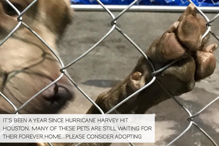 Volunteering in Hurricane Harvey Animal Rescue -Slide41