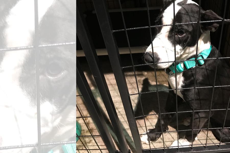 Volunteering in Hurricane Harvey Animal Rescue -Slide42